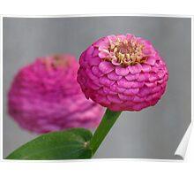 Ice Cream Flowers Poster