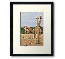 Giraffe - Jealousy and Funny Love Framed Print