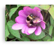 Bumble Bee in sphere. Metal Print