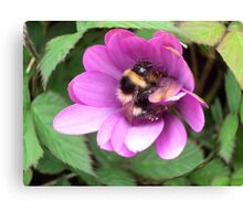 Bumble Bee in sphere. Canvas Print