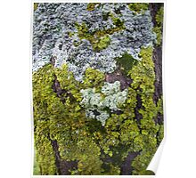 moss amongst the lichen Poster