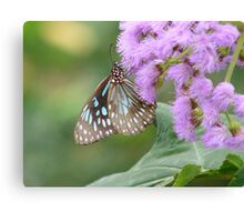 with delicate wings Canvas Print
