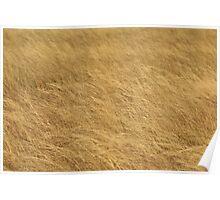 Golden Grass, Classical Textures Poster