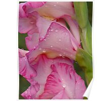 Silky Pink Raindrops Poster
