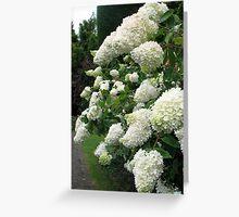 WHITE PANICULATA HYDRANGEAS Greeting Card