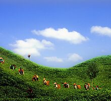 Tea garden at west java by ming2