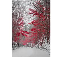 Beauty in Winter Photographic Print