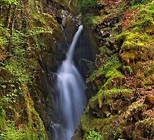 Aira Force - The Lake District by Dave Lawrance