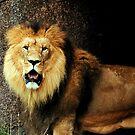 The lions den by Alan Mattison