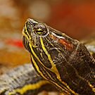 Portrait of a Turtle by Buckwhite