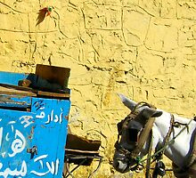 Colors of Cairo by BarkingGecko