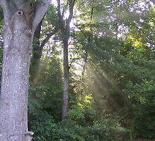 Through the Trees by JoyceAnn
