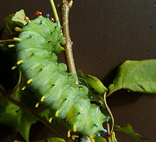 Larvae, Just Hanging Out  by ClaireBull