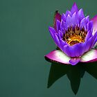 Lotus  by JYOTIRMOY Portfolio Photographer