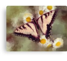 Butterfly on a daisy Canvas Print
