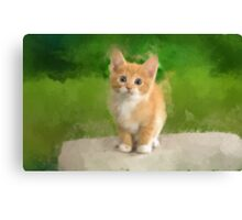 Cutie on the Rock Canvas Print