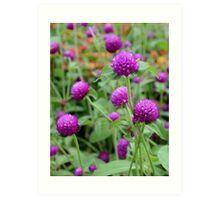 Purple Globe Amaranth Art Print