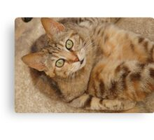 Ive just been tickled! Canvas Print