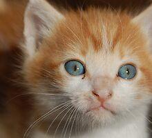 little kitty by Isabella Bullock