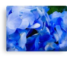 Beautiful Blue Hydrangea Canvas Print