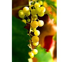 September Fruits Photographic Print