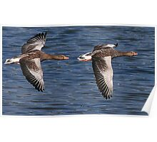 A Brace Of Greylags Poster