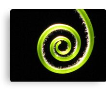A Tendril Moment Canvas Print