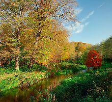 Minnowburn Beeches (October 2009) by Gerard1972