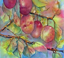 Pick Your Own Plums by bevmorgan