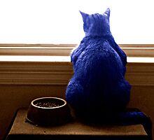 Chat Bleu by faedinggrace