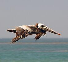 In Flight by tom j deters