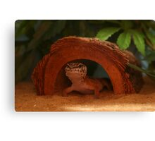 eddie lizard Canvas Print