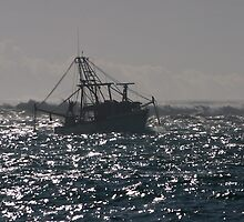 Coming Home, Tweed River NSW by Odille Esmonde-Morgan