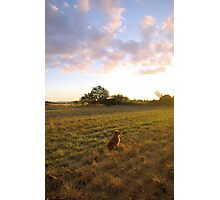 even the puppy enjoys a good sunset... Photographic Print