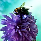 Bumble Bee on purple flower by JZdezigns