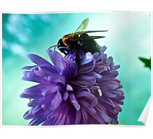Bumble Bee on purple flower Poster