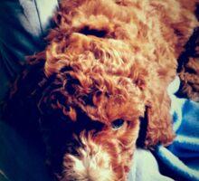Groodle Puppy Zoe Sticker