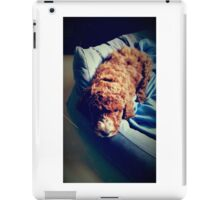 Groodle Puppy Zoe iPad Case/Skin
