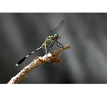 Clour of the fly Photographic Print