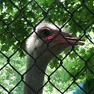 Captive Nature by kotoro