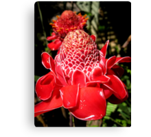 Funky red waxy flower Canvas Print