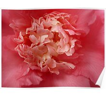OG Camellia 1 Poster