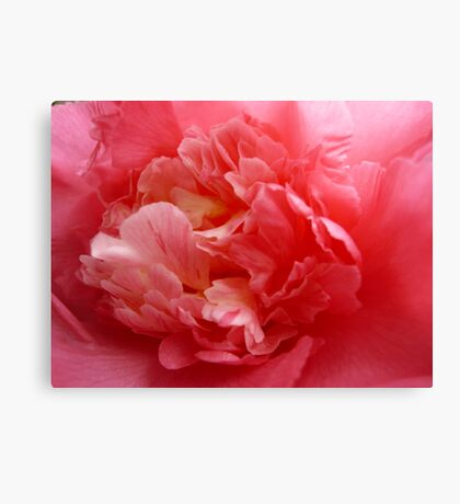 OG Camellia 2 Canvas Print