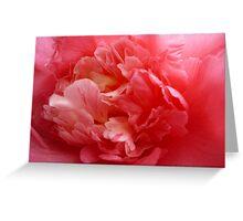 OG Camellia 2 Greeting Card