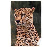 The Pensive Cheetah Poster