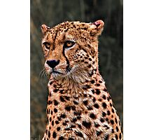 The Pensive Cheetah Photographic Print