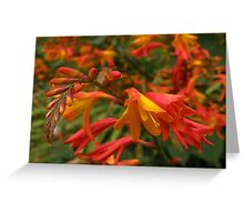 Multitude of Vibrant Blooms Greeting Card