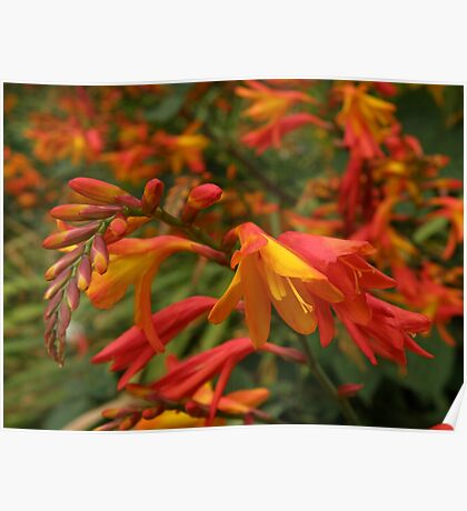 Multitude of Vibrant Blooms Poster