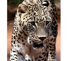 Persian Leopard Photographic Print