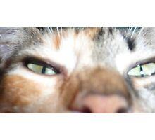 green cat eyes Photographic Print